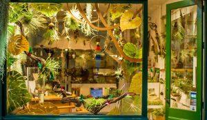 vitrine tropique