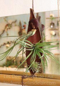 composition 3 plantes