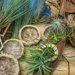 feuille-de-coco-graine-deucalyptus-calebasse-argentea-bulbosa-juncifolia-velutina-et-caput-medusae