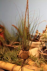 Juncifolia macramé