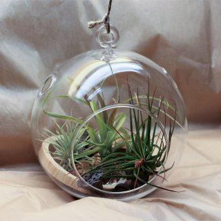 bulle diam 15cm 3 plantes
