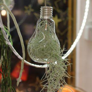 petite ampoule usneoides 2