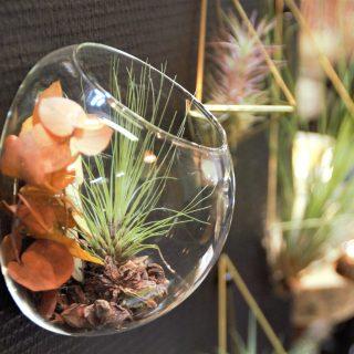 Les compositions en verre